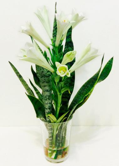 植物界的丹寧風10