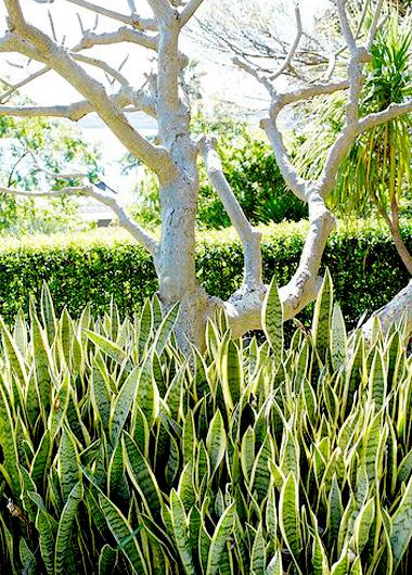 植物界的丹寧風2