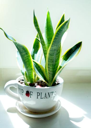 植物界的丹寧風4