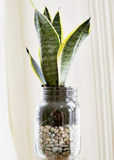 植物界的丹寧風5