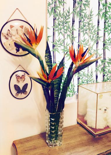 植物界的丹寧風6